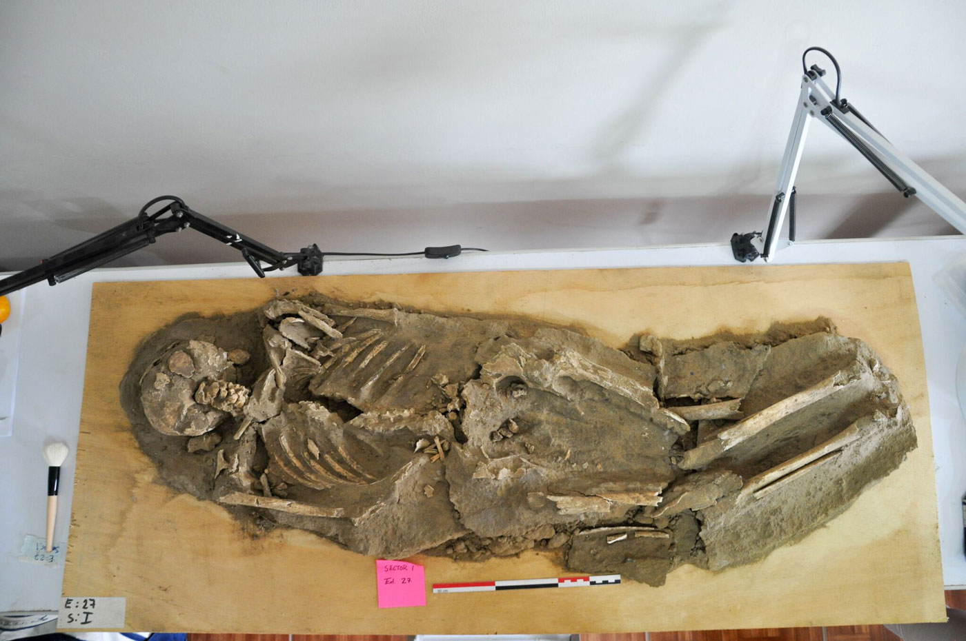 Peruvian crew chief Raul Saavedra and staff meticulously clean a skeleton discovered near the modern city of Chiclayo, which is close to the Sicán's ancient capital. The Sicán people—also known as the Lambayeque—ruled Peru's northern coast from about A.D. 800–1375.